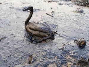 Судья-рыбак вывел нефтяные пятна наДунае на«чистую воду»