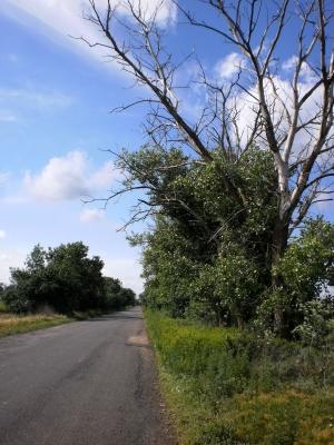 Дороги Измаильщины: опасность снизу и… сверху!