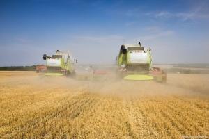 В Измаильском районе идёт массовая уборка урожая