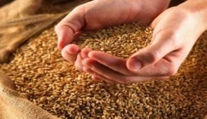 Хлеборобы собрали свыше ста тысяч тонн ранних зерновых