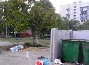Человеческая лень погубит дерево