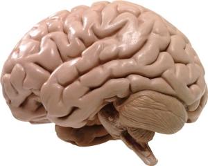 Простой способ сохранить мозг до глубокой старости