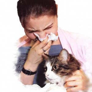 Бытовая аллергия: причины и профилактика