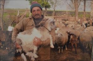 Овцеводство - богатство и гордость бессарабского болгарина