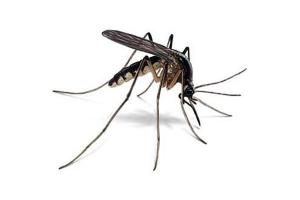 В Измаильском районе зафиксирован случай завозной малярии