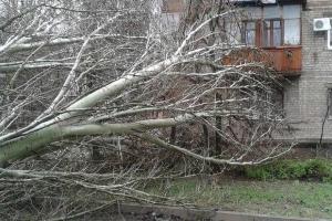 Непогода накрыла Одессу: поваленные деревья и разбитые авто, погиб человек.