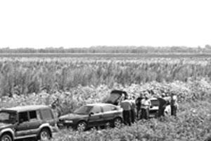Конопля становится популярной сельхозкультурой?