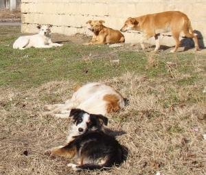 """Ренийцы хотят """"повесить"""" своих собак на Измаильский район. Пока на уровне шутки…"""