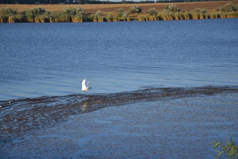 Озеро Сафьяны на грани гибели