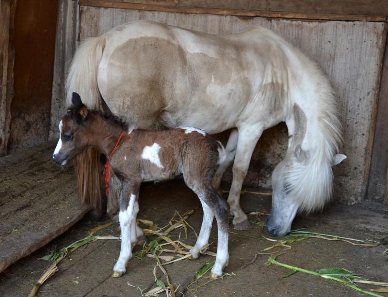 У мамы пони теперь есть дочурка-тихоня