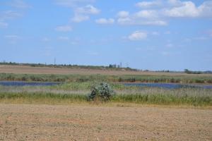 Куда ведёт кривая озера Кривого?
