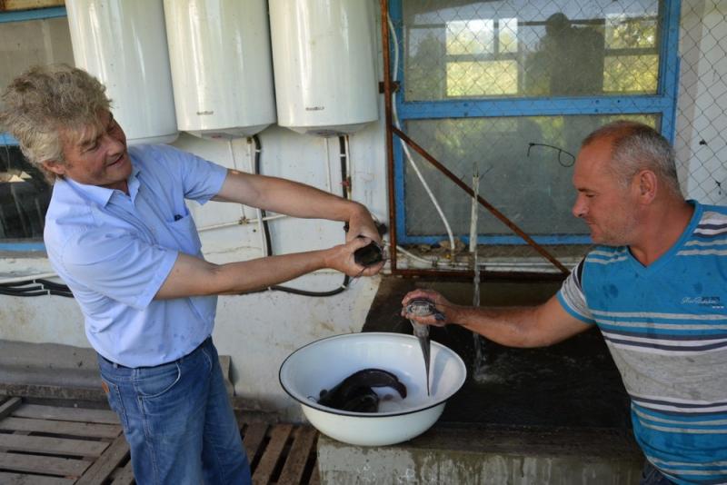 Сами с усами: в Измаильском районе приручают сома