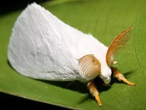Как спасти растения от белой моли
