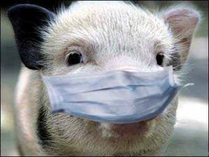 Измаильщина намерена противостоять африканской чуме свиней
