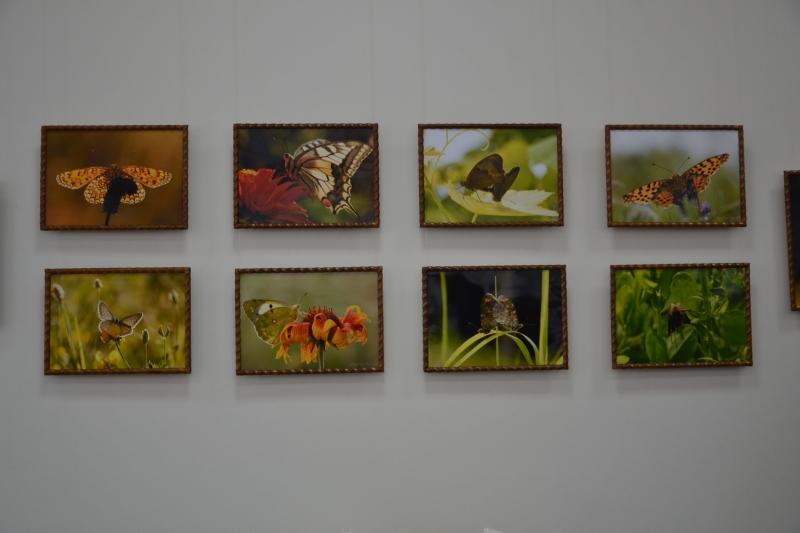Эхо измаильских бабочек