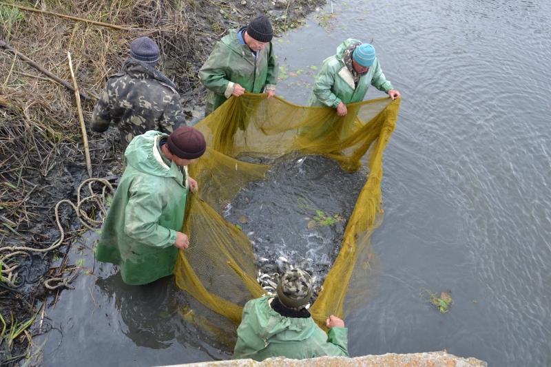 На Измаильщине приступили к зарыблению водоёмов