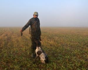 Перепелиная охота – начало сезона