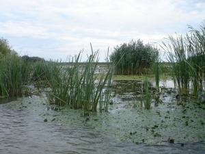 Очередной проект Евросоюза позволит оздоровить озеро Картал и возродить его рыбные ресурсы