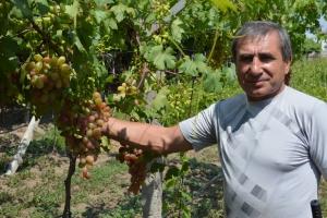 Влюблённый в виноградную лозу