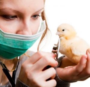 Птичий грипп смертельно опасен и для людей