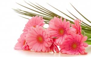 Цветы умеют говорить, причём на разных языках