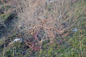Почему выкорчёвывают персики под Утконосовкой?