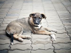 Любовь к животным – показатель гуманности человека