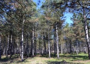 Барановский лес: пробуждение