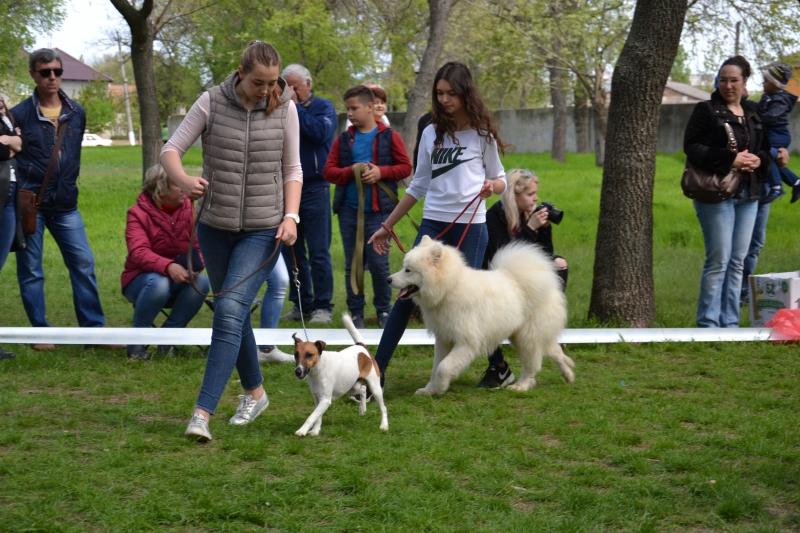 На смотре собак самым очаровательным оказался Леонард