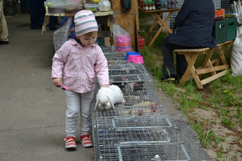 В Чкаловском сквере вновь красовались гуси и кролики