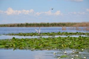 Один день из жизни озера Кугурлуй
