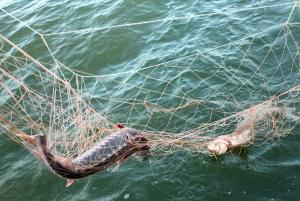 Пограничники обнаружили в Чёрном море почти километр браконьерских сетей и мёртвого дельфина