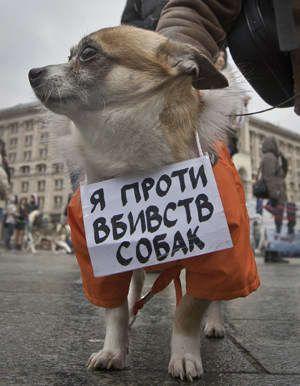 Собаки - здравствуют, люди - в бешенстве (Обновлено)