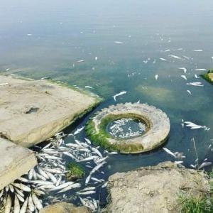 В Хаджибейском лимане — массовый замор рыбы