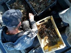 36 кг раков и почти 400 тысяч гривен ущерба: в Одесской области задержали браконьеров