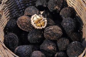 В Измаильском районе появится галерея редкого чёрного ореха