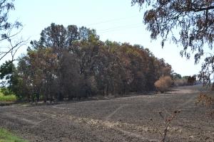 Рабочая группа зафиксировала сгоревшие лесополосы