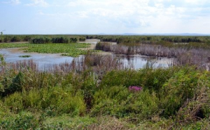 Создана областная комиссия по изучения проблем придунайских озёр