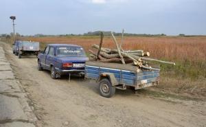 Топливная лихорадка: в Ренийском районе сельчане по талонам от сельсовета начали массово вырубать деревья