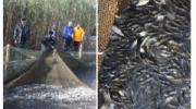 Карп, карась и толстолобик: в водоёмы Одесской области выпустили почти один миллион рыб
