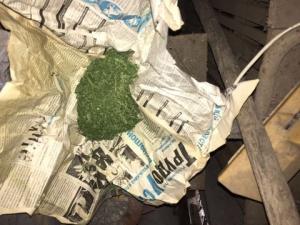 Иностранец сберёг коноплю, выросшую у него на участке самосевом
