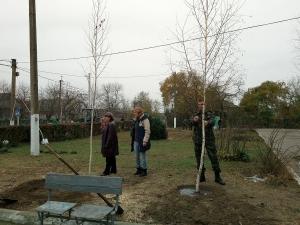Берёзовая роща украсила школьный двор в Кислице