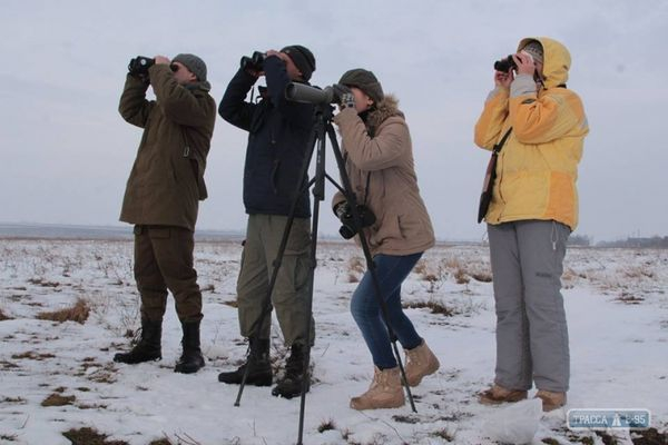 Экологи Одесской области две недели следят за уникальным фламинго из Международной красной книги