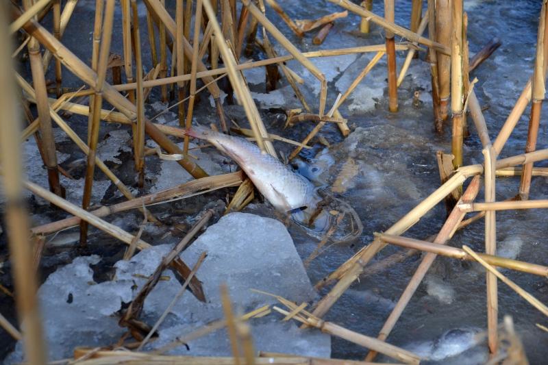 Большое количество малька в Ялпуге погубила январская стихия