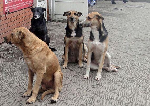 """В Рени численность бродячих собак будет регулироваться за счёт международного проекта """"Четыре лапы"""""""