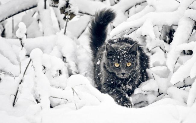 Прогноз погоды на 11 февраля: на юг Украины надвигаются сильные осадки
