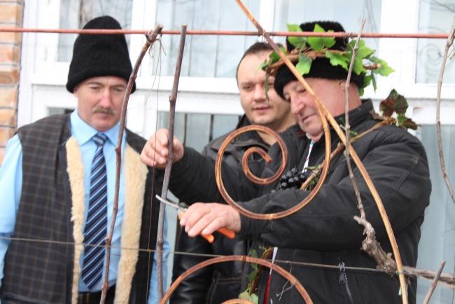 В поселке Суворово отметили праздник виноградарей