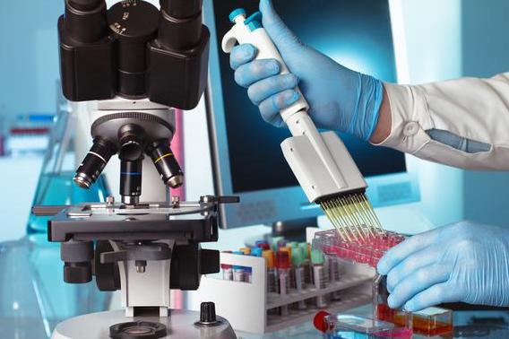 Березовая кора содержит лекарство от рака?