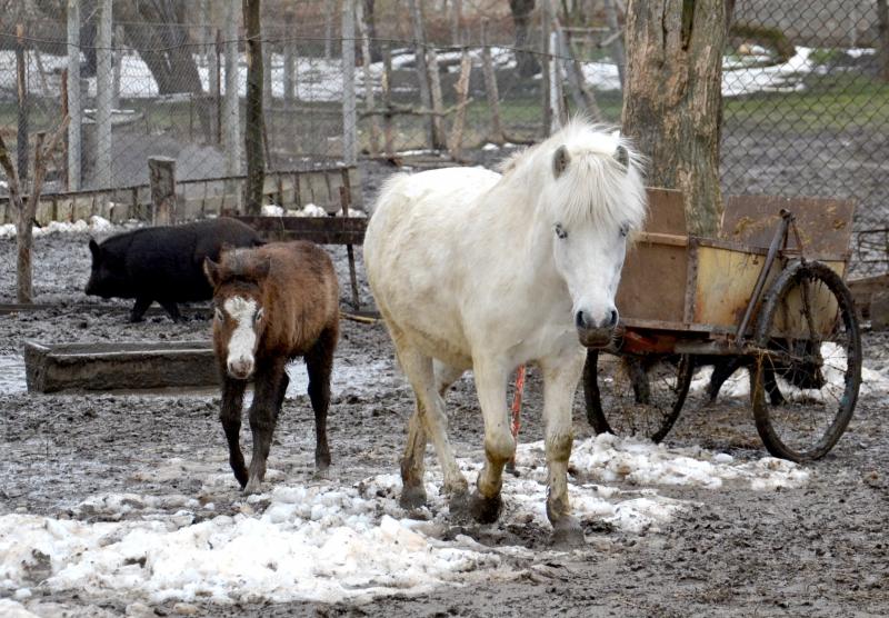 У пони Ники и Лютика родился задорный сынок