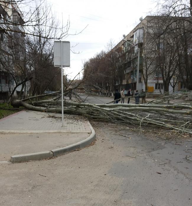 Падающие деревья: чудом обошлось без жертв